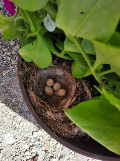 Roza skupina – našli smo ptičja jajčka